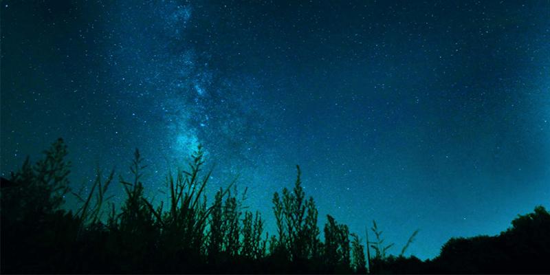 おやすみの森01
